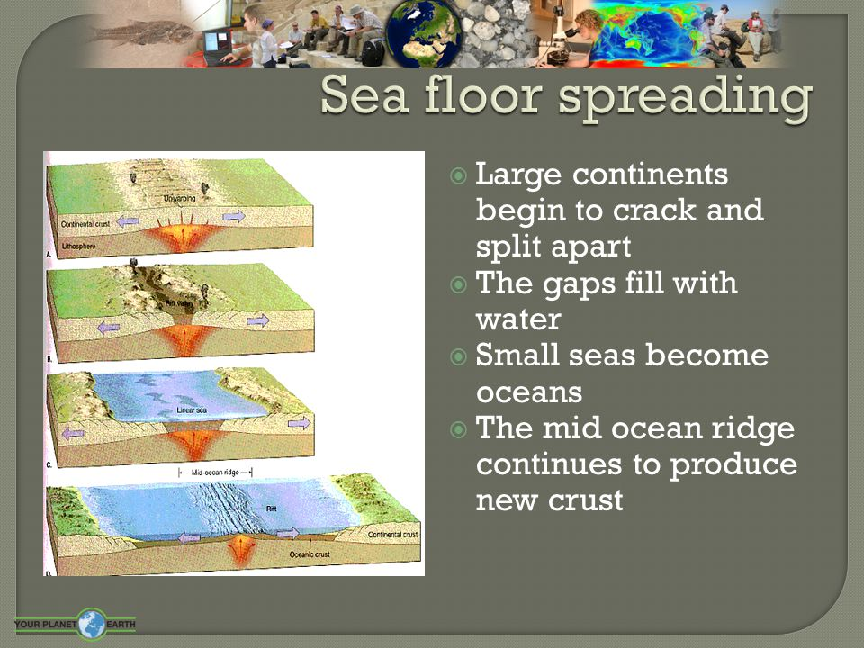  Large continents begin to crack and split apart  The gaps fill with water  Small seas become oceans  The mid ocean ridge continues to produce new
