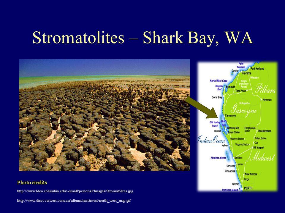 Stromatolites – Shark Bay, WA http://www.ldeo.columbia.edu/~small/personal/Images/Stromatolites.jpg http://www.discoverwest.com.au/album/northwest/north_west_map.gif Photo credits