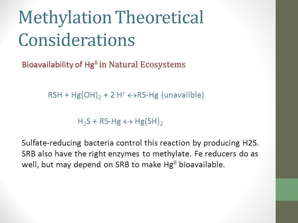 Possible Relationship between Methylmercury Production to Sulfate Consumption in Bioreactors
