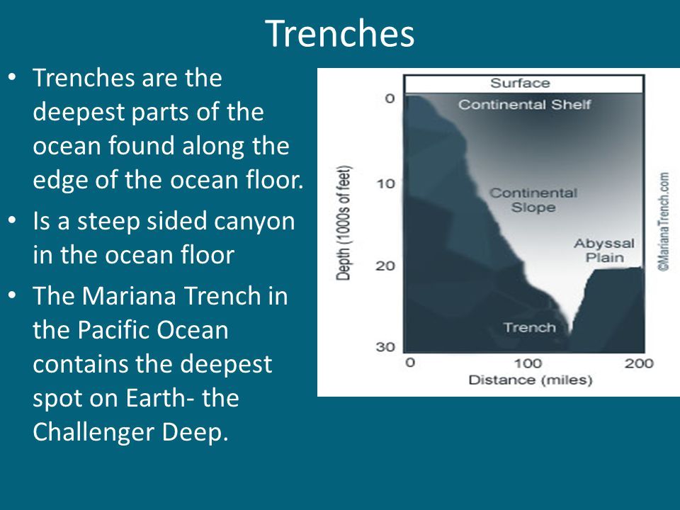 Trenches Trenches are the deepest parts of the ocean found along the edge of the ocean floor. Is a steep sided canyon in the ocean floor The Mariana T