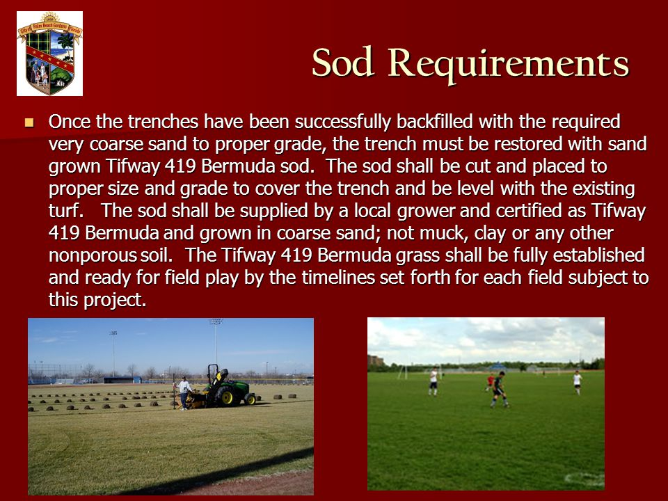 Sod Requirements Once the trenches have been successfully backfilled with the required very coarse sand to proper grade, the trench must be restored with sand grown Tifway 419 Bermuda sod.