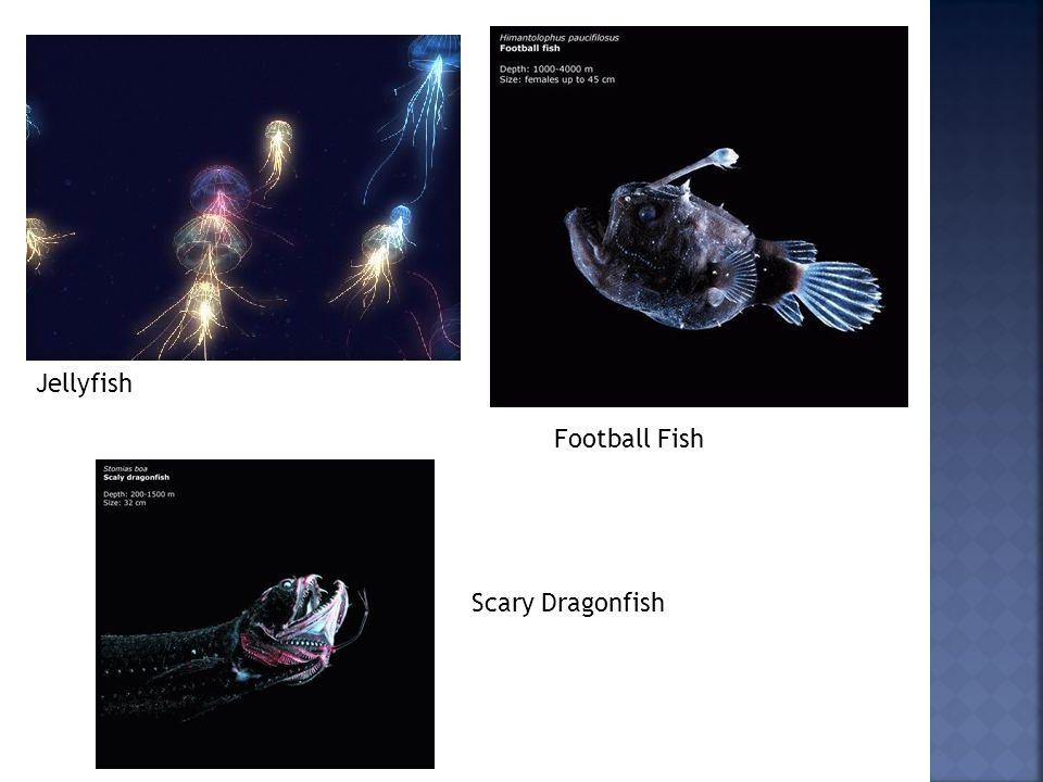 Jellyfish Football Fish Scary Dragonfish