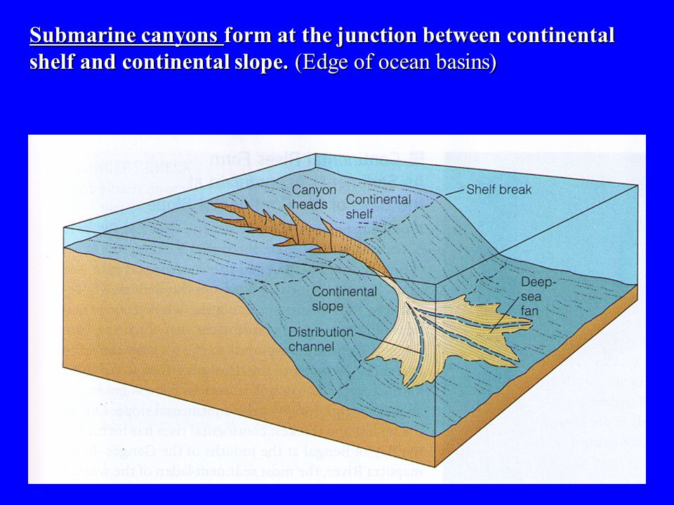 Submarine canyons form at the junction between continental shelf and continental slope. (Edge of ocean basins)