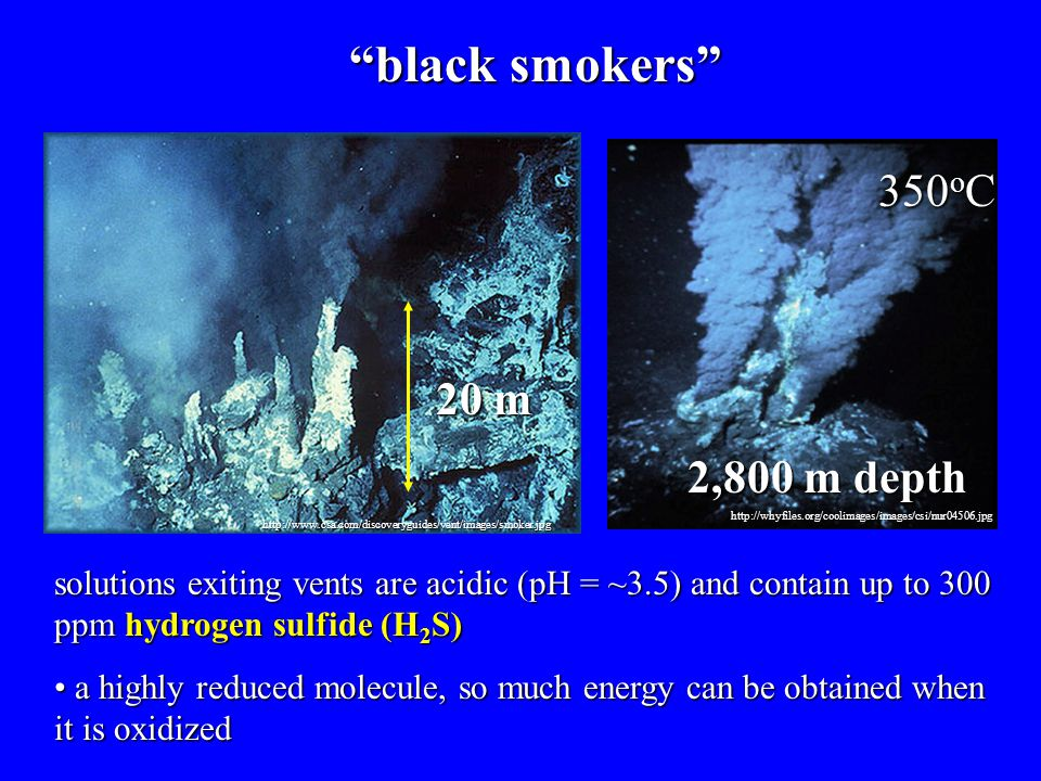 "http://www.csa.com/discoveryguides/vent/images/smoker.jpg http://whyfiles.org/coolimages/images/csi/nur04506.jpg ""black smokers"" 20 m 350 o C 2,800 m"