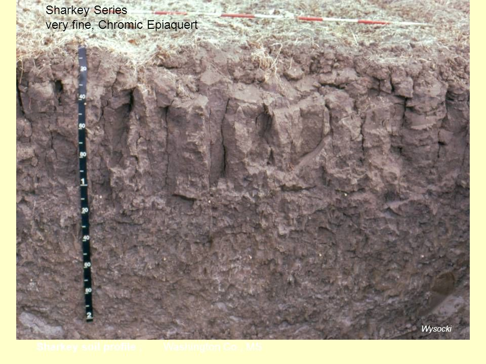 Wysocki Sharkey soil profile ; Washington Co., MS Sharkey Series very fine, Chromic Epiaquert