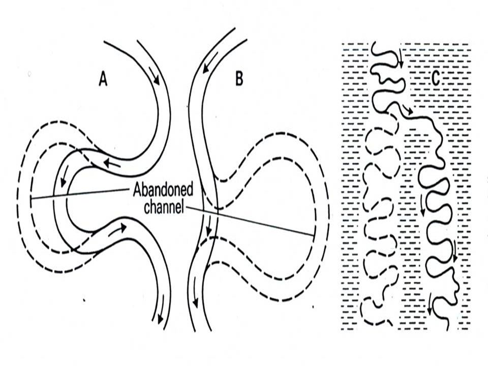 ( Peterson, 1981; fig.
