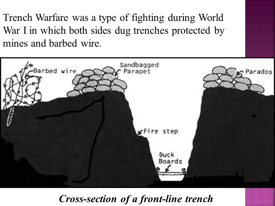 Trench Warfare was a type of fighting during World War I in which both sides dug trenches protected by mines and barbed wire. Cross-section of a front