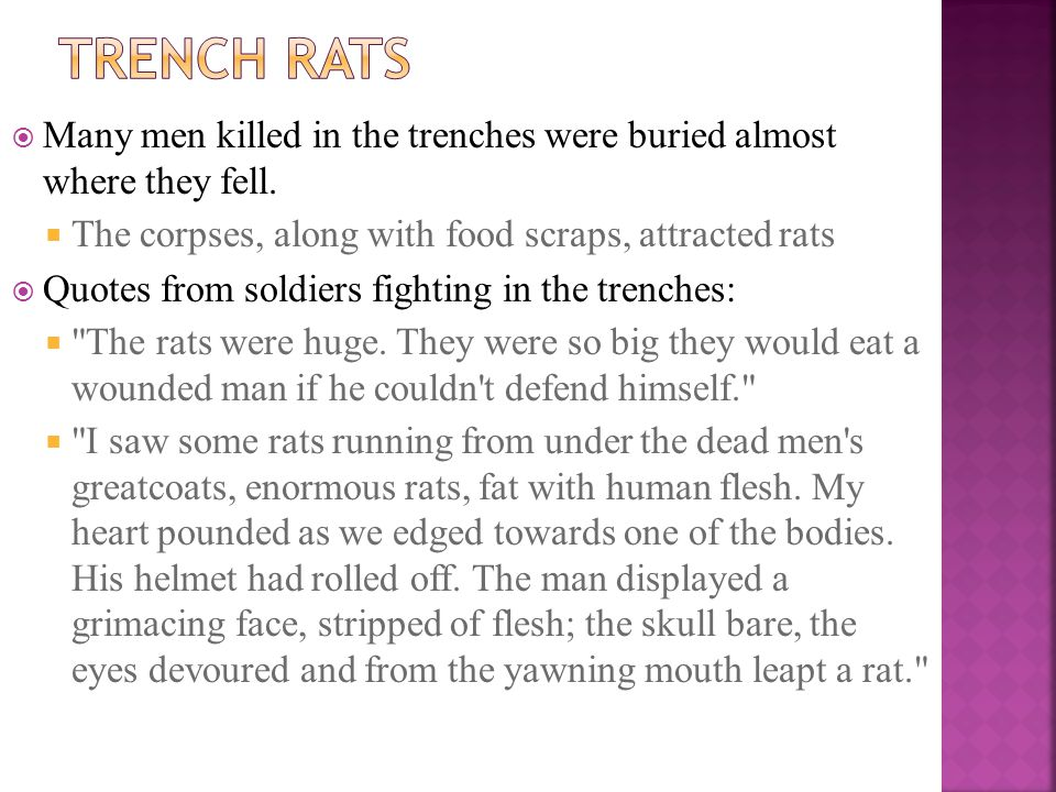 Many men killed in the trenches were buried almost where they fell.  The corpses, along with food scraps, attracted rats  Quotes from soldiers fig