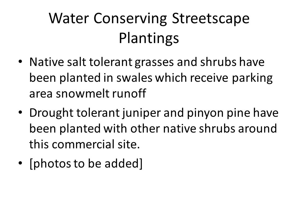 Water Conserving Streetscape Plantings Native salt tolerant grasses and shrubs have been planted in swales which receive parking area snowmelt runoff Drought tolerant juniper and pinyon pine have been planted with other native shrubs around this commercial site.