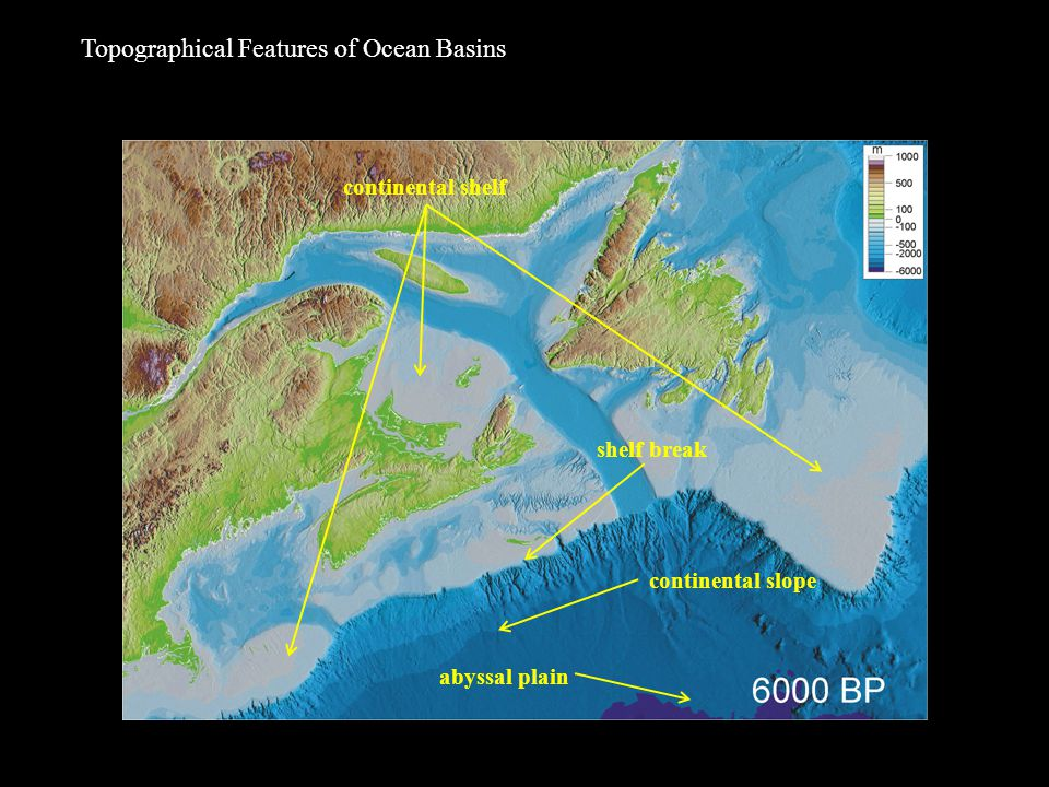 Topographical Features of Ocean Basins continental shelf shelf break continental slope abyssal plain