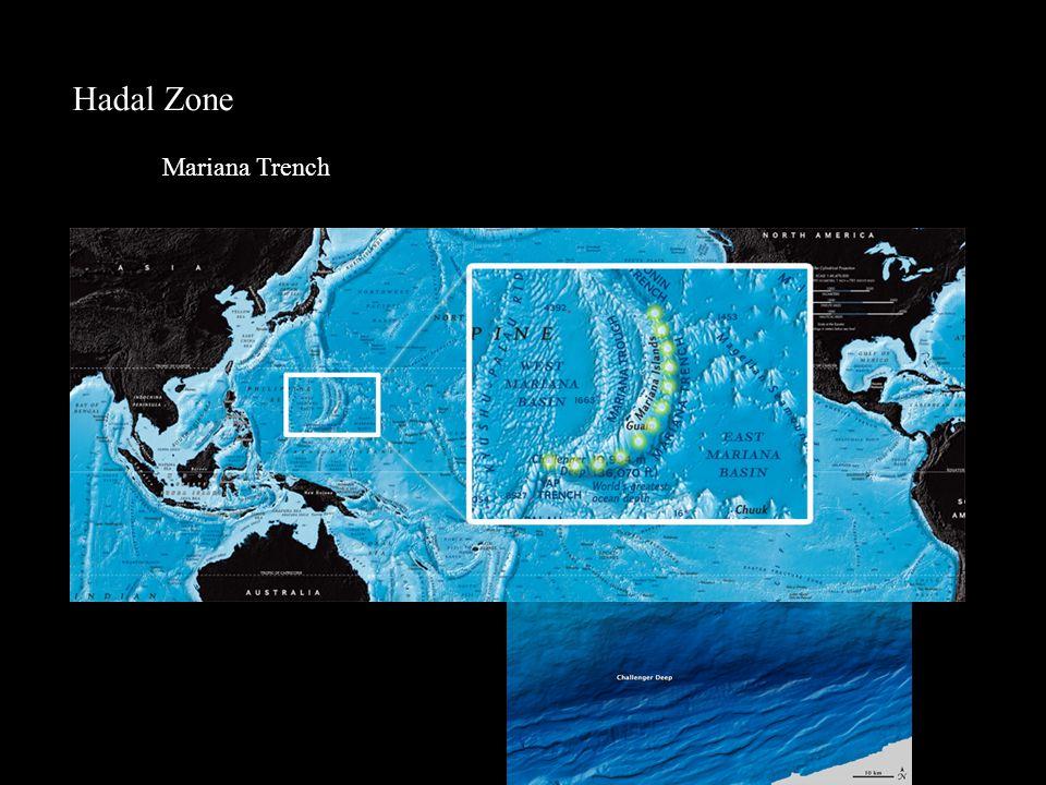 Hadal Zone Mariana Trench