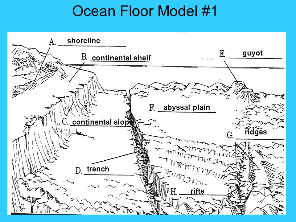 shoreline continental shelf continental slope trench abyssal plain guyot ridges rifts Ocean Floor Model #1