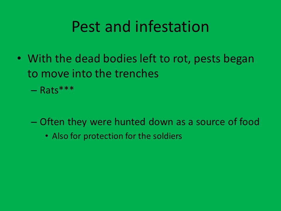 Pest and infestation With the dead bodies left to rot, pests began to move into the trenches – Rats*** – Often they were hunted down as a source of fo