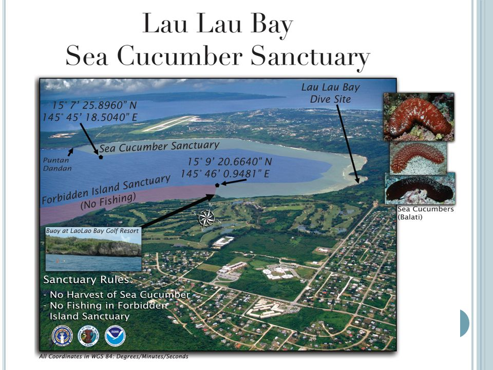 Laulau Bay Sea cucumber Reserve Established to protect all species of sea cucumber All other activities are permitted in the area Moratorium for Sea cucumbers is still in effect