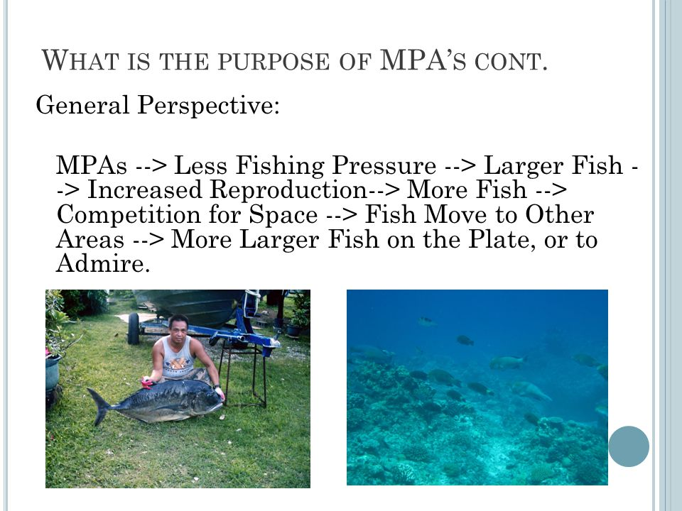 W HAT IS THE PURPOSE OF MPA' S CONT.