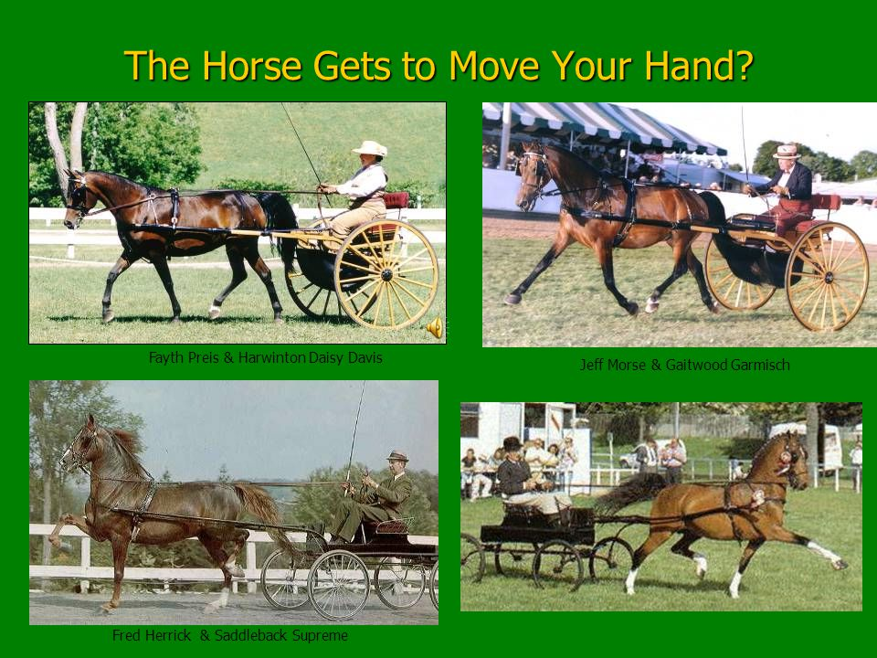Improving Communication for The Horse The Essential Exercise Let's Make a Deal The Horse gets to move your hand with his mouth in exchange for you getting to move and control the horse's head and neck.