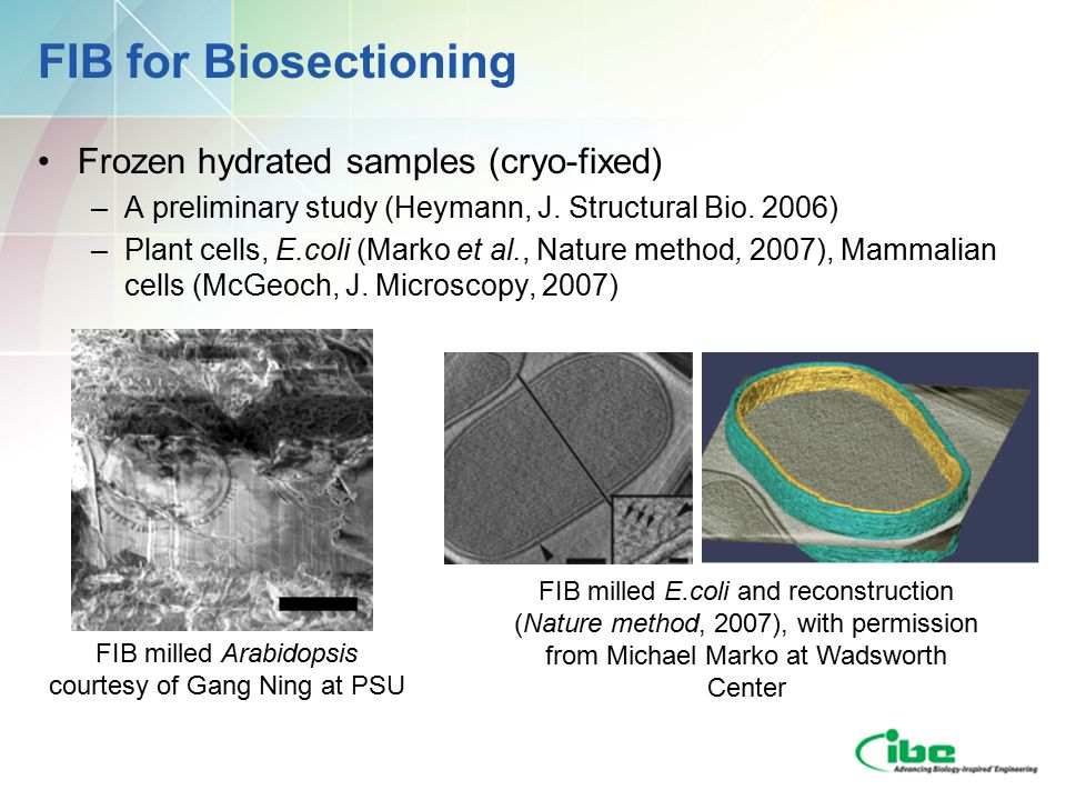 FIB for Biosectioning Frozen hydrated samples (cryo-fixed) –A preliminary study (Heymann, J.
