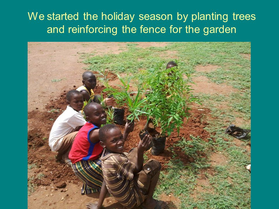 We started the holiday season by planting trees and reinforcing the fence for the garden