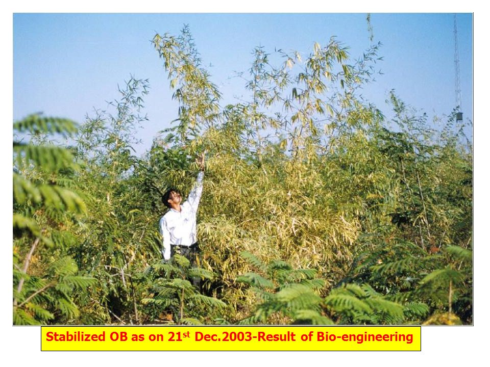 Stabilized OB as on 21 st Dec.2003-Result of Bio-engineering