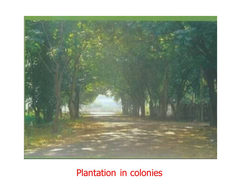 Plantation in colonies