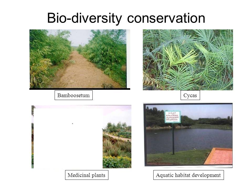 Bio-diversity conservation BamboosetumCycas Medicinal plantsAquatic habitat development