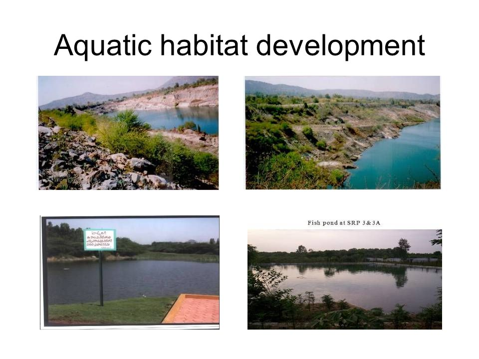 Aquatic habitat development
