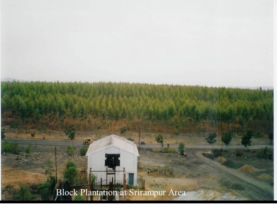 Block Plantation at Srirampur Area