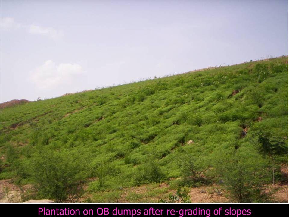 Plantation on OB dumps after re-grading of slopes