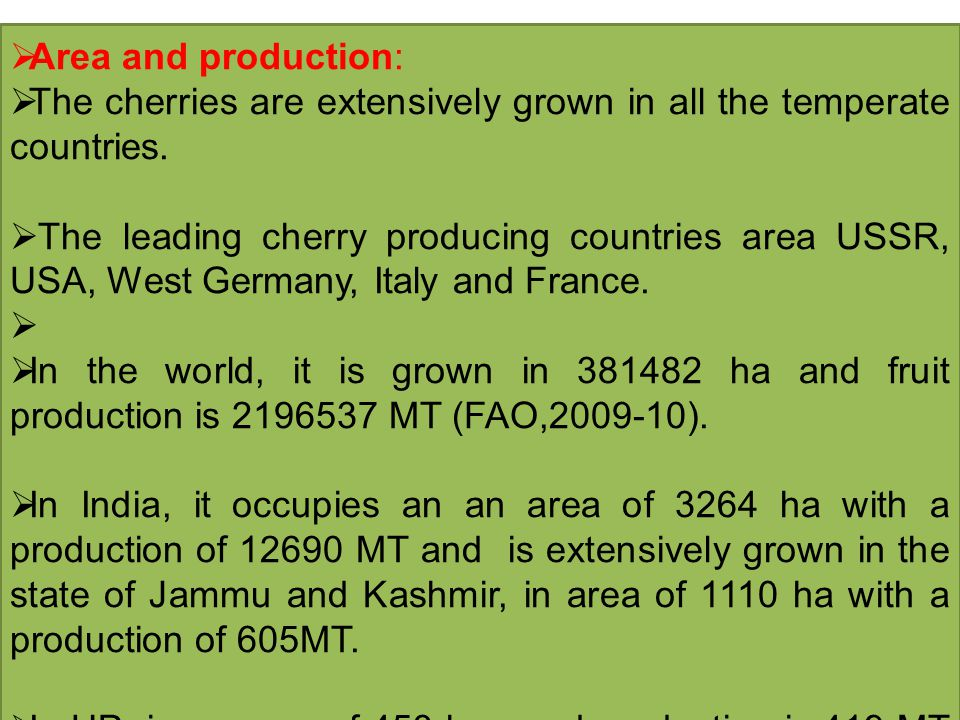  Area and production:  The cherries are extensively grown in all the temperate countries.