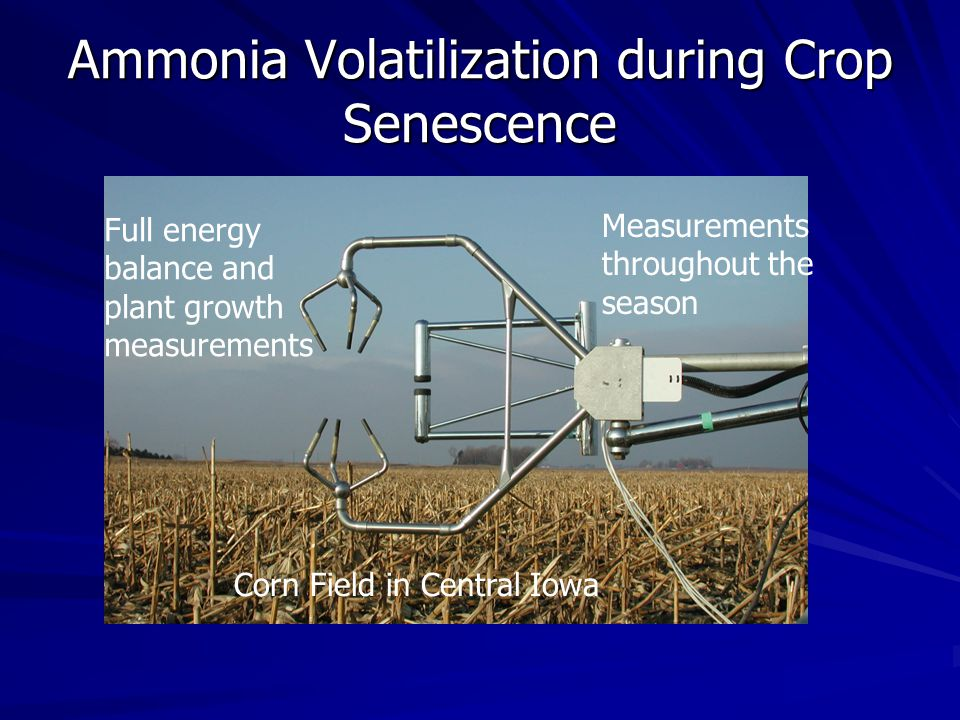 Ammonia Volatilization during Crop Senescence Corn Field in Central Iowa Measurements throughout the season Full energy balance and plant growth measurements