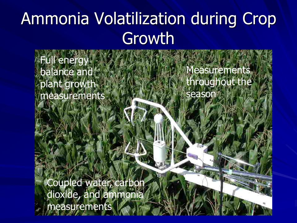 Ammonia Volatilization during Crop Growth Corn Field in Central Iowa Measurements throughout the season Full energy balance and plant growth measurements Coupled water, carbon dioxide, and ammonia measurements