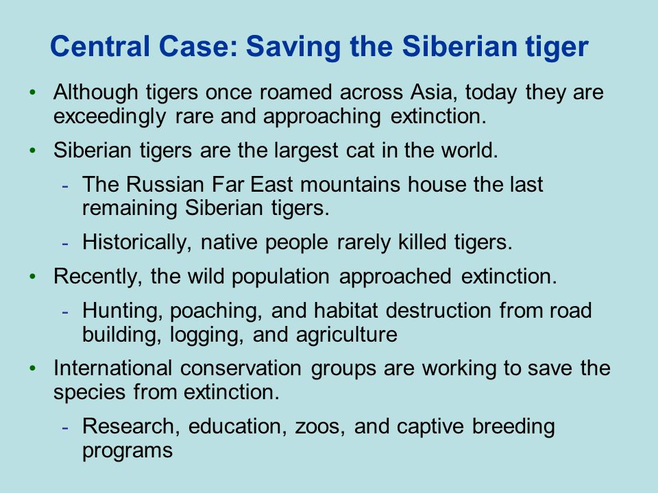 Central Case: Saving the Siberian tiger Although tigers once roamed across Asia, today they are exceedingly rare and approaching extinction. Siberian