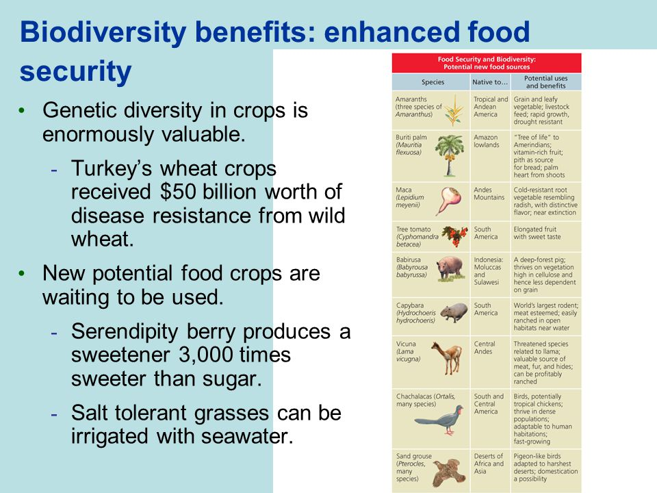 Biodiversity benefits: enhanced food security Genetic diversity in crops is enormously valuable. - Turkey's wheat crops received $50 billion worth of