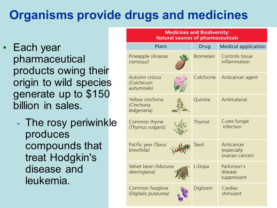 Organisms provide drugs and medicines Each year pharmaceutical products owing their origin to wild species generate up to $150 billion in sales. - The