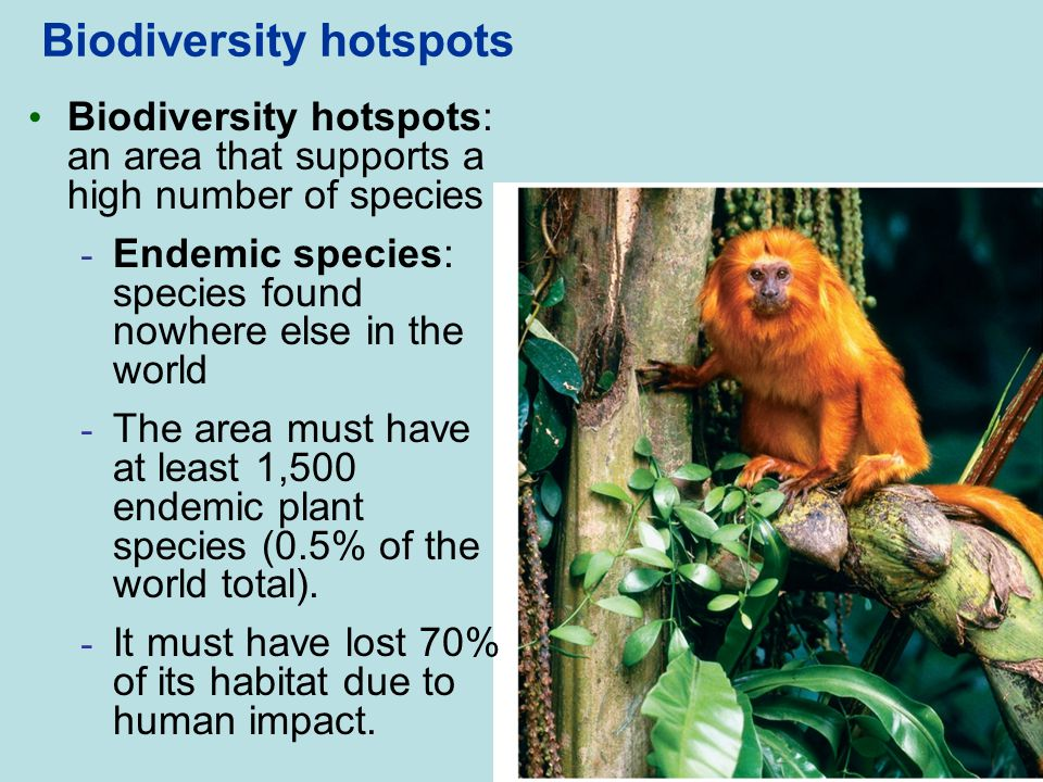 Biodiversity hotspots Biodiversity hotspots: an area that supports a high number of species - Endemic species: species found nowhere else in the world