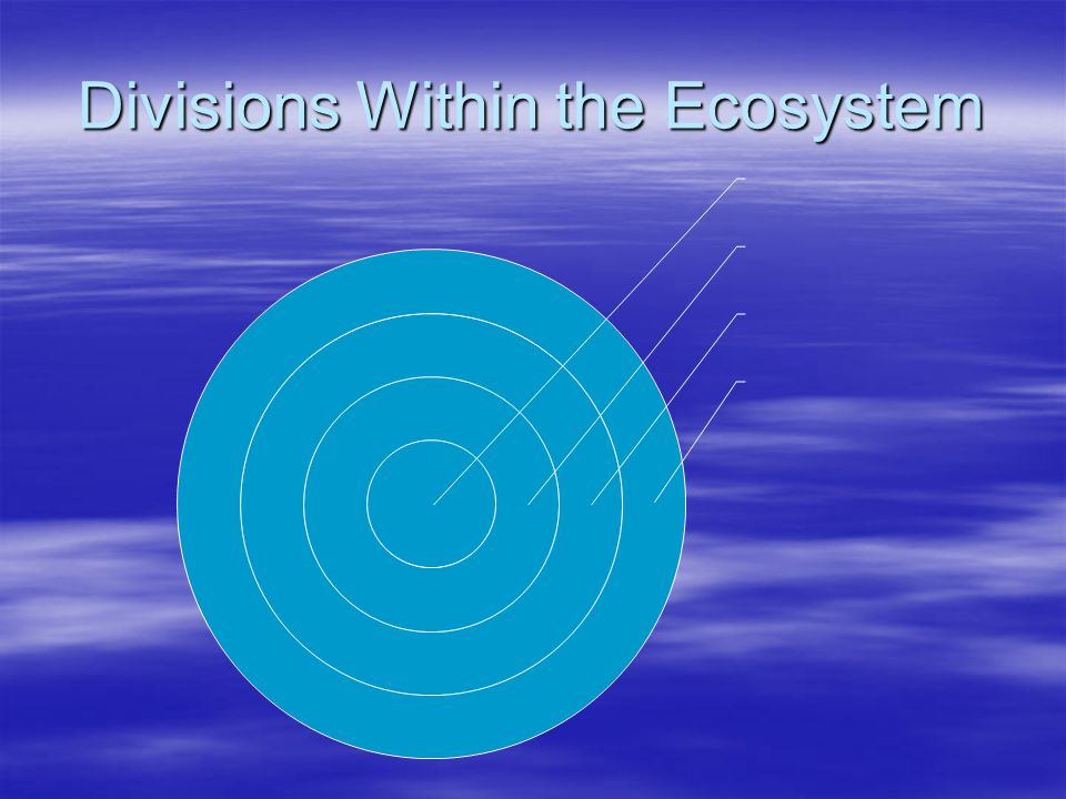 Divisions Within the Ecosystem