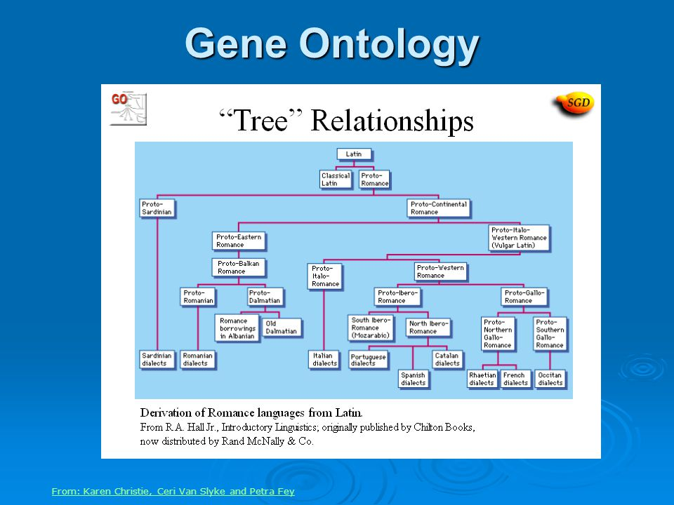 Gene Ontology From: Karen Christie, Ceri Van Slyke and Petra Fey