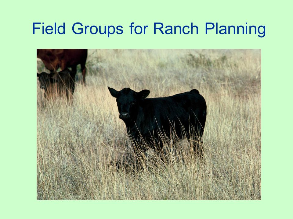 Arizona Strip Agencies & Groups: AZSLD, BLM, CE, NRCD, NRCS and USFS Number of CRM ranches: 6 Notes: The agencies do not meet on a regular schedule.