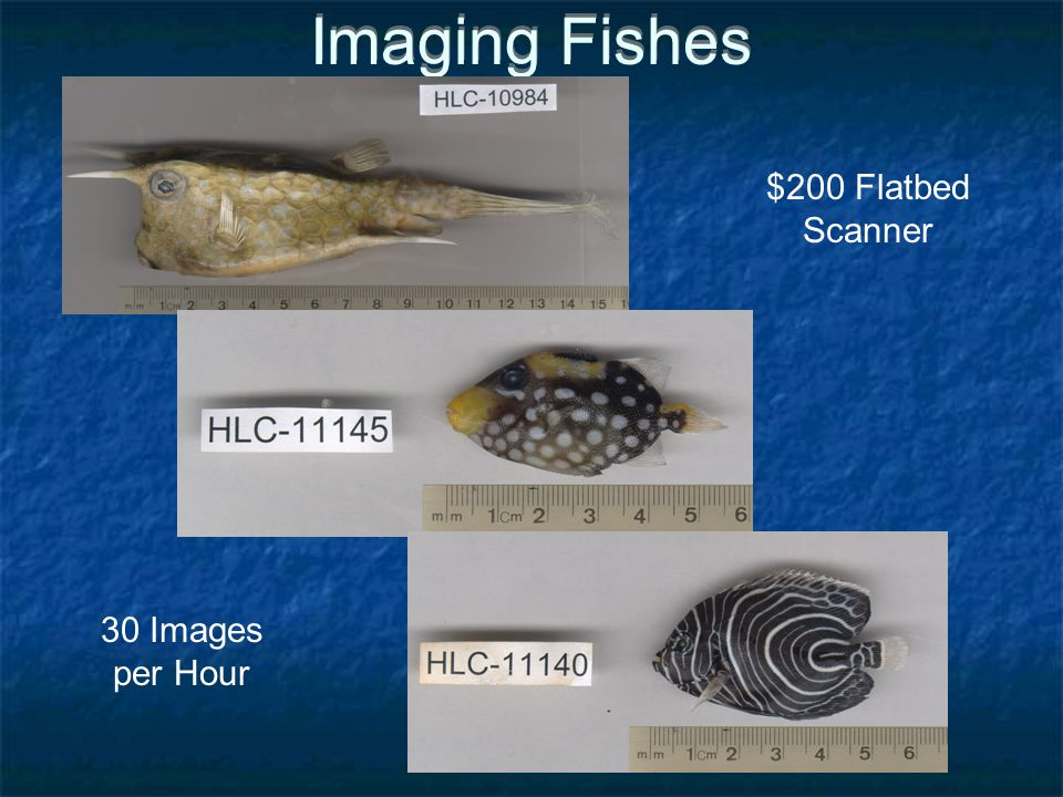 Imaging Fishes $200 Flatbed Scanner 30 Images per Hour