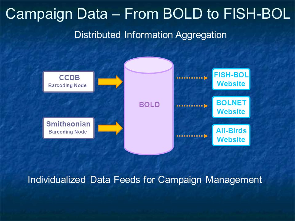 Campaign Data – From BOLD to FISH-BOL BOLD CCDB Barcoding Node Smithsonian Barcoding Node FISH-BOL Website All-Birds Website BOLNET Website Distributed Information Aggregation Individualized Data Feeds for Campaign Management
