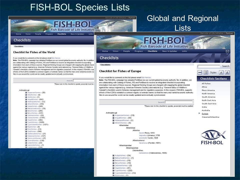 FISH-BOL Species Lists Global and Regional Lists