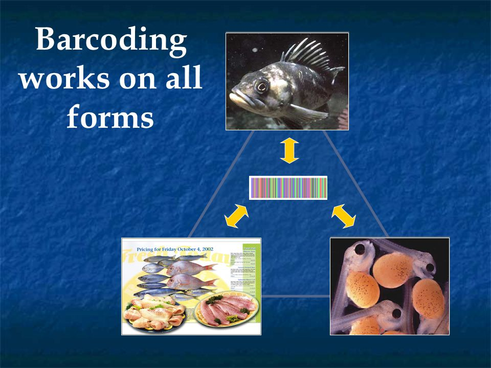 First publication on fish barcoding: