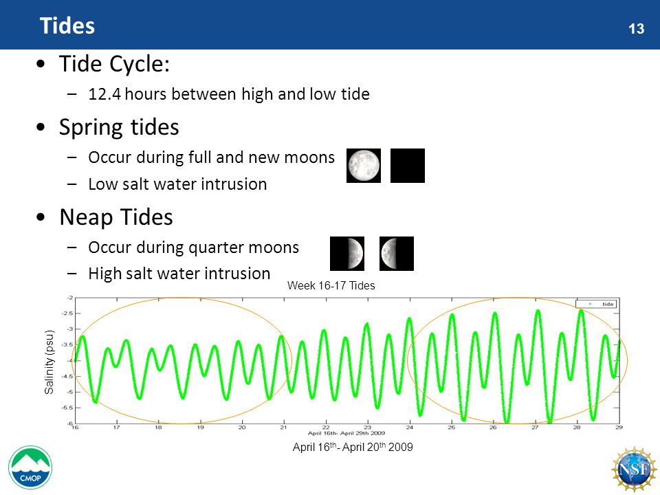 13 Tides Tide Cycle: –12.4 hours between high and low tide Spring tides –Occur during full and new moons –Low salt water intrusion Neap Tides –Occur during quarter moons –High salt water intrusion Salinity (psu) April 16 th - April 20 th 2009 Week 16-17 Tides