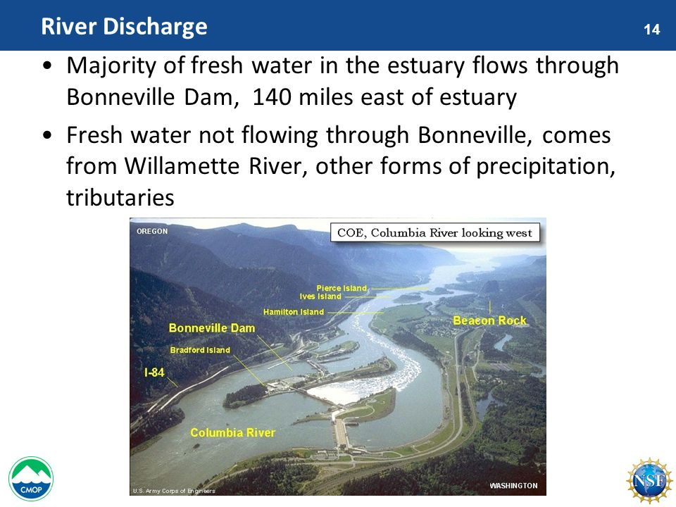 14 River Discharge Majority of fresh water in the estuary flows through Bonneville Dam, 140 miles east of estuary Fresh water not flowing through Bonneville, comes from Willamette River, other forms of precipitation, tributaries