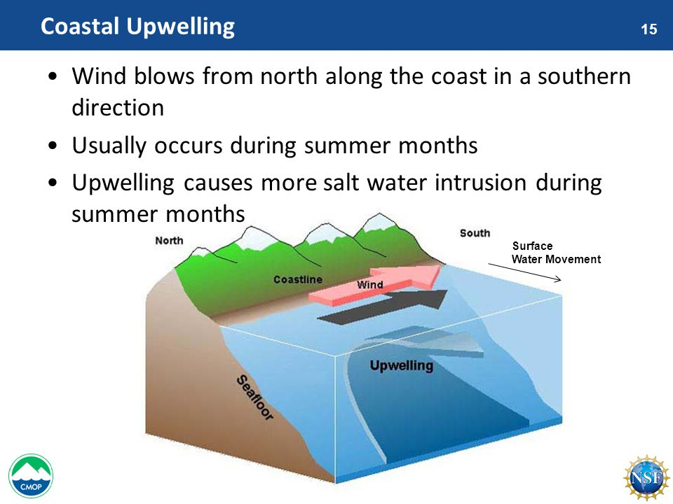 15 Coastal Upwelling Wind blows from north along the coast in a southern direction Usually occurs during summer months Upwelling causes more salt water intrusion during summer months Surface Water Movement