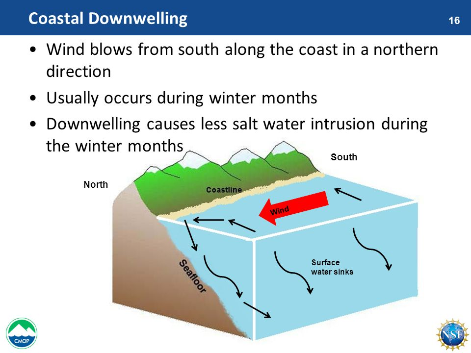 16 Wind Surface water sinks Coastal Downwelling Wind blows from south along the coast in a northern direction Usually occurs during winter months Downwelling causes less salt water intrusion during the winter months North South