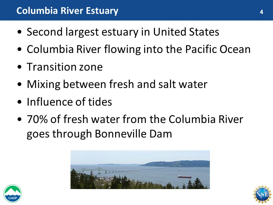 4 Columbia River Estuary Second largest estuary in United States Columbia River flowing into the Pacific Ocean Transition zone Mixing between fresh and salt water Influence of tides 70% of fresh water from the Columbia River goes through Bonneville Dam