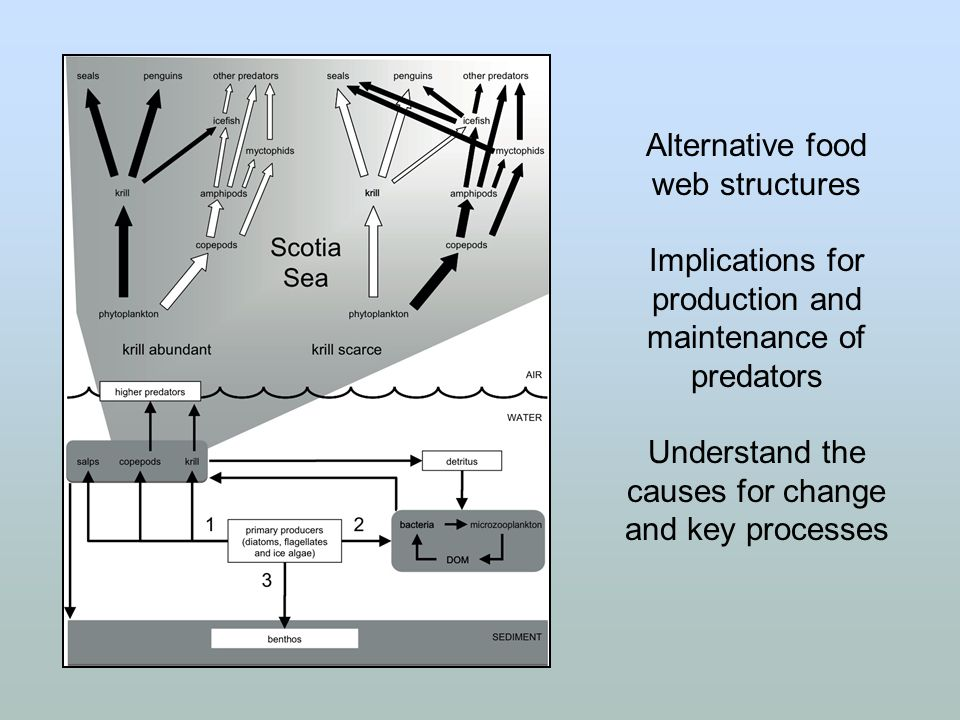 Alternative food web structures Implications for production and maintenance of predators Understand the causes for change and key processes