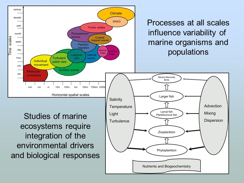 Processes at all scales influence variability of marine organisms and populations Studies of marine ecosystems require integration of the environmenta