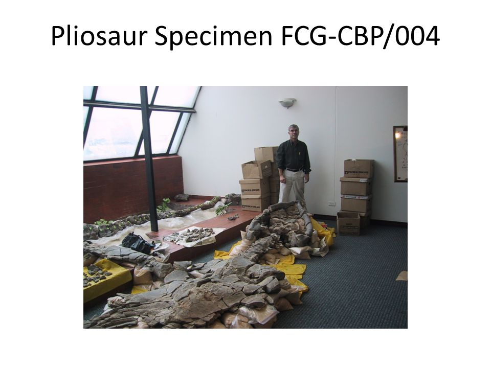 Pliosaur Specimen FCG-CBP/004